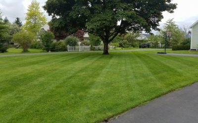 What You Should Expect When Hiring a Professional Lawn Service