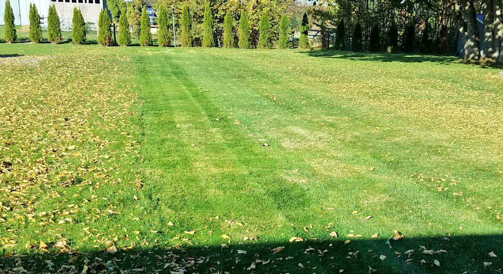 Is your lawn ready for winter?