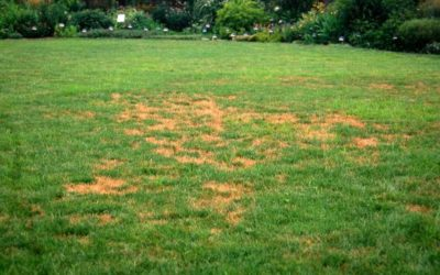 Common Reasons for Grass Brown Spots & How To Fix Them